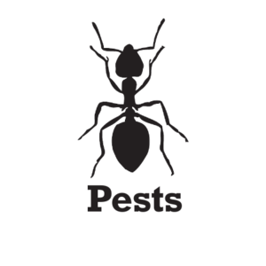 Pests Production